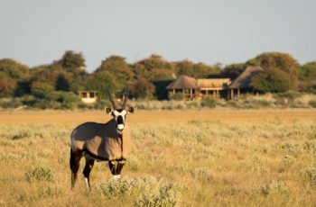 16 Night Botswana Lodge-based Self-drive (Mub-Vfa)