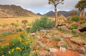 Namaqualand