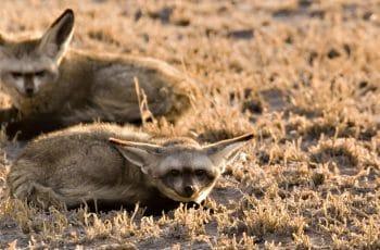 7 Night Botswana Fly-in (Mub-Mub)