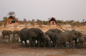 Elephant Sands Lodge