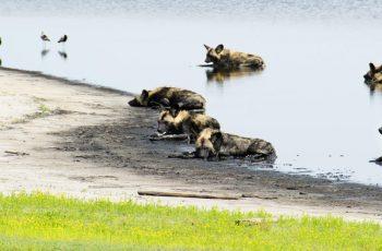 Liuwa Plains National Park
