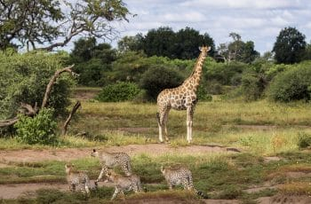 25 Night Botswana & Zimbabwe Self-drive (Jnb-Jnb)