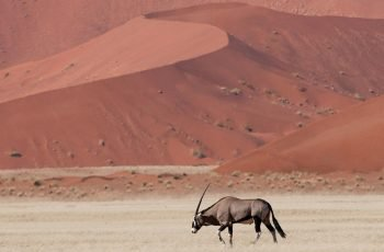 21 Night Namibia & Botswana Lodge-based Self-drive (Wdh-Vfa)