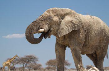 19 Night Namibia & Botswana Self-drive (Wdh-Vfa)
